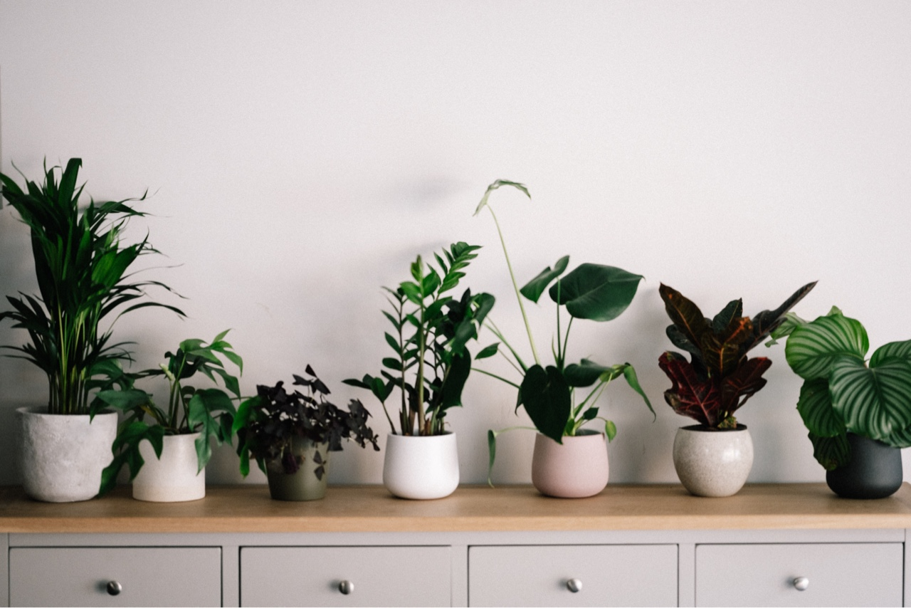 Add These Apartment-Friendly Houseplants to Your Must-Grow List