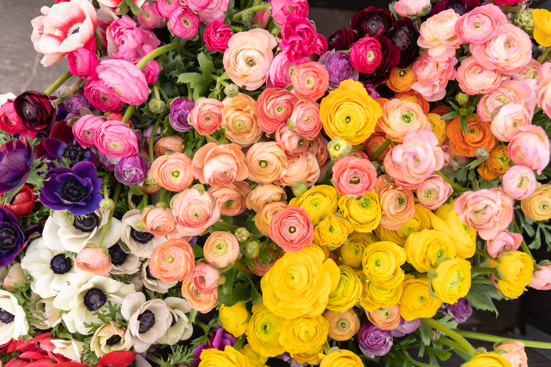 Surprise Mom With Fresh Blooms From House of Flowers
